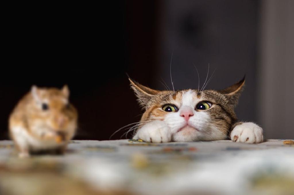 crna cuga maca troje lezbijskih slika