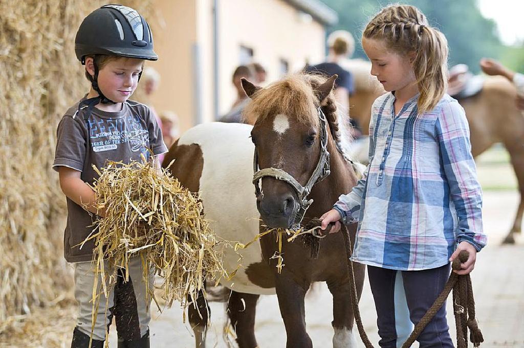 cum să mi fac ponei să piardă în greutate